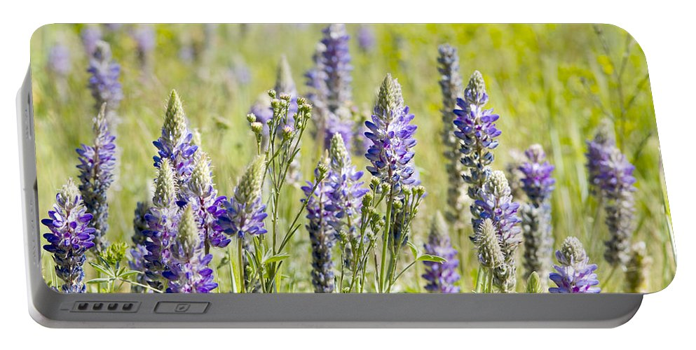 Lupine Portable Battery Charger featuring the photograph Lupine 2 by Dianne Phelps
