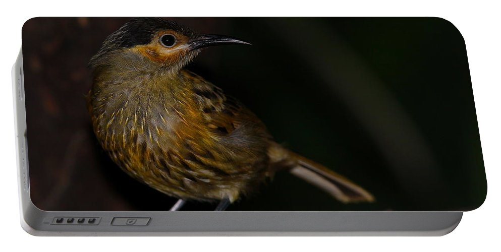 Macleay's Portable Battery Charger featuring the photograph Macleay's Honeyeater by Bruce J Robinson