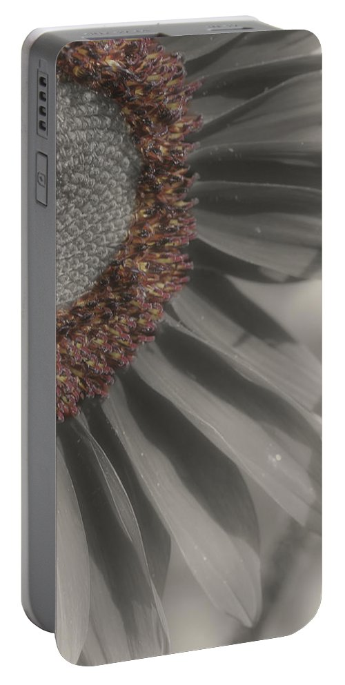 Sunflower Portable Battery Charger featuring the photograph Macro Sunflower In Partial Color by Smilin Eyes Treasures