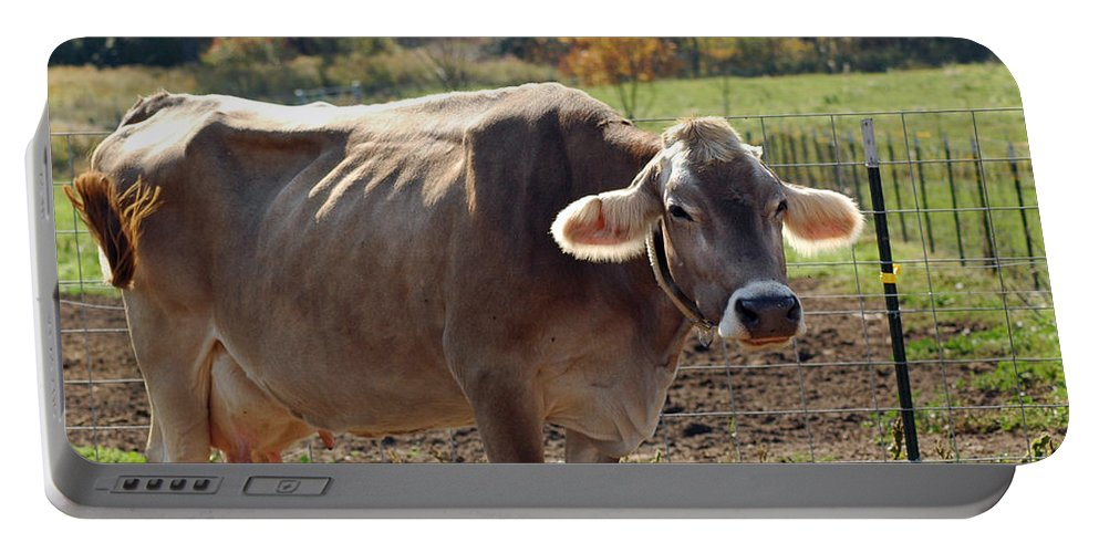 Animals Portable Battery Charger featuring the photograph Mad Cow Tail Swish by LeeAnn McLaneGoetz McLaneGoetzStudioLLCcom