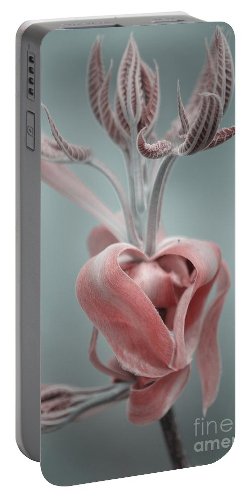 Magnolia Portable Battery Charger featuring the photograph Magnolia by September Stone