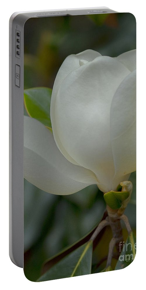 Magnolia Portable Battery Charger featuring the photograph Magnolia Opening by Deborah Benoit