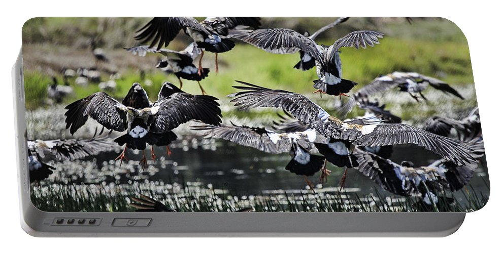 Magpie Geese Portable Battery Charger featuring the photograph Magpie Geese In Flight Mcminn Lagoon by Douglas Barnard