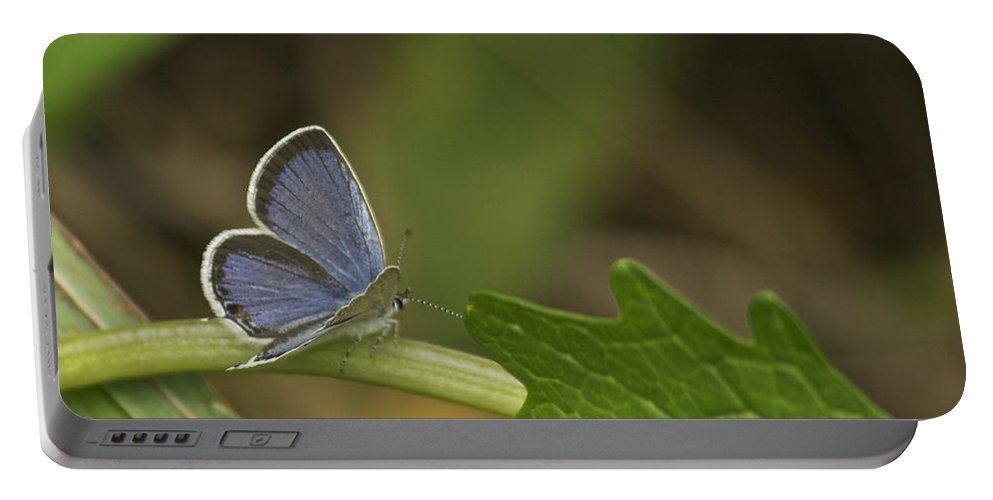 Blue Portable Battery Charger featuring the photograph Male Eastern Tailed Blue Butterfly 3063 by Michael Peychich