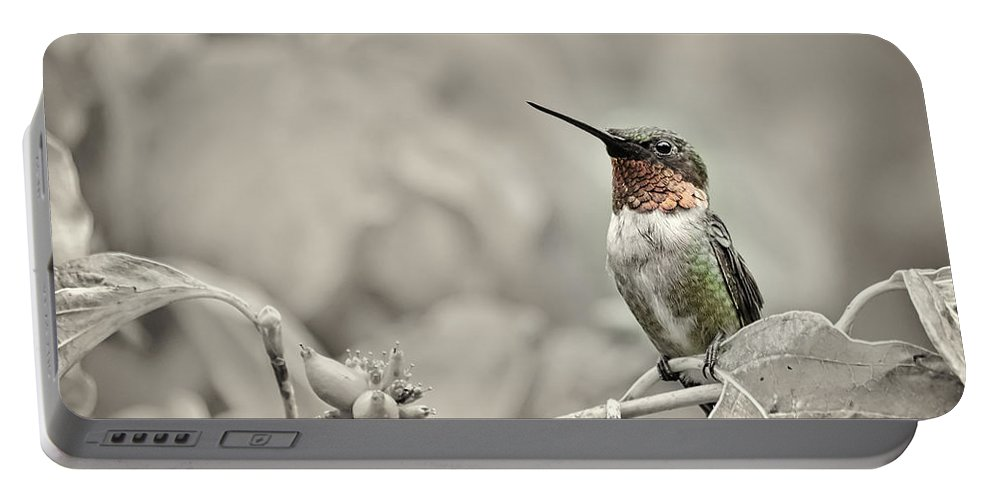 K-30 Portable Battery Charger featuring the photograph Male Ruby Throated Hummingbird by Lori Coleman