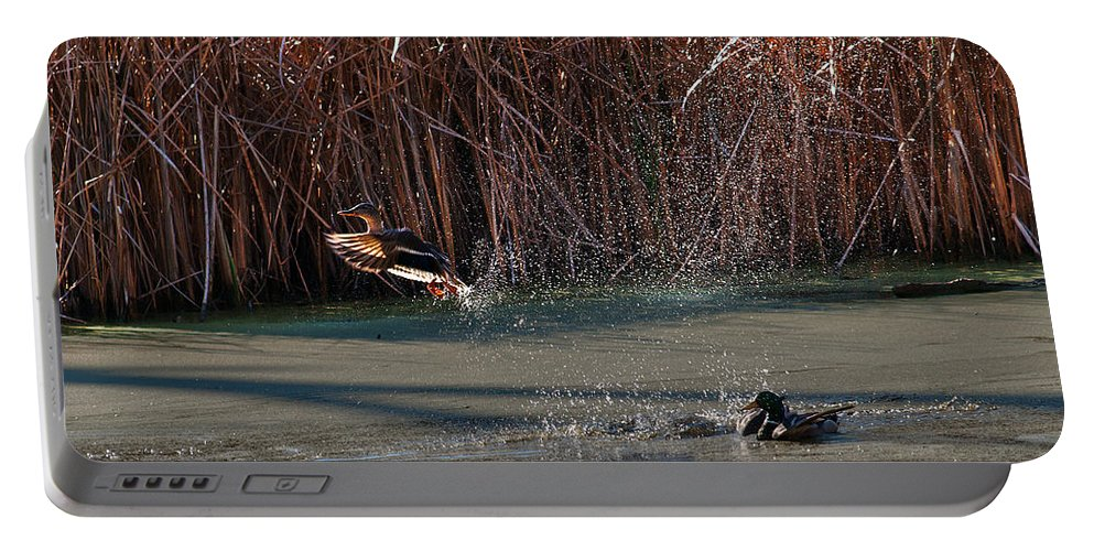 Mallard Portable Battery Charger featuring the photograph Mallard In Flight by Edward Peterson