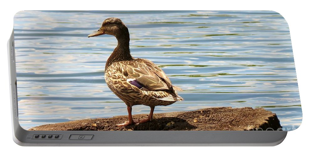 Campbells Portable Battery Charger featuring the photograph Mallard Sunning by Art Dingo