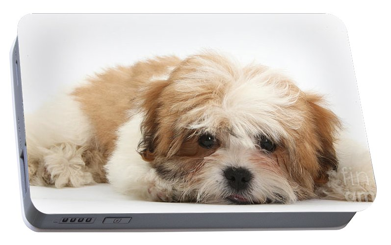 Maltese Shih Tzu Mix Puppy Lying Down Portable Battery Charger For