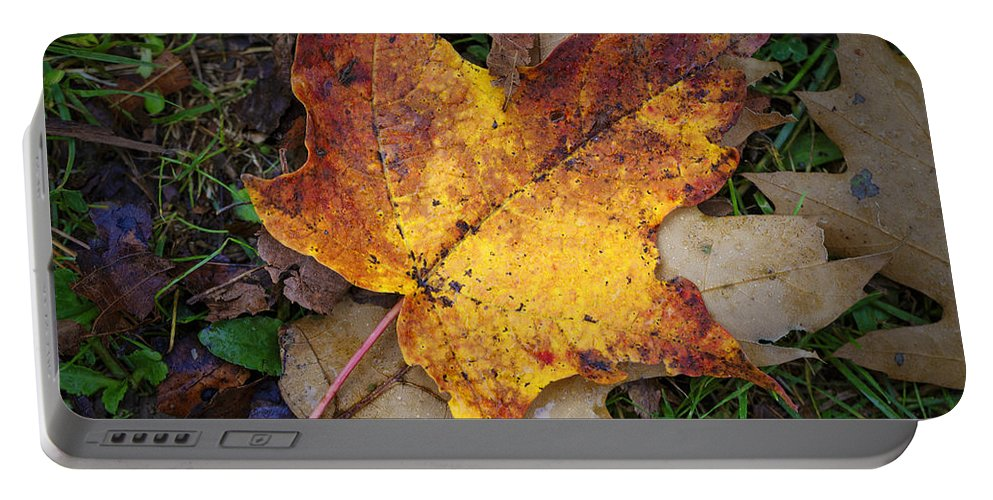 Maple Leaf Portable Battery Charger featuring the photograph Maple Leaf In Fall by Rick Berk