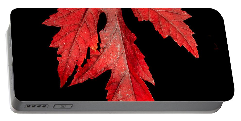 Maple Portable Battery Charger featuring the photograph Maple Leaf by Robert Bales