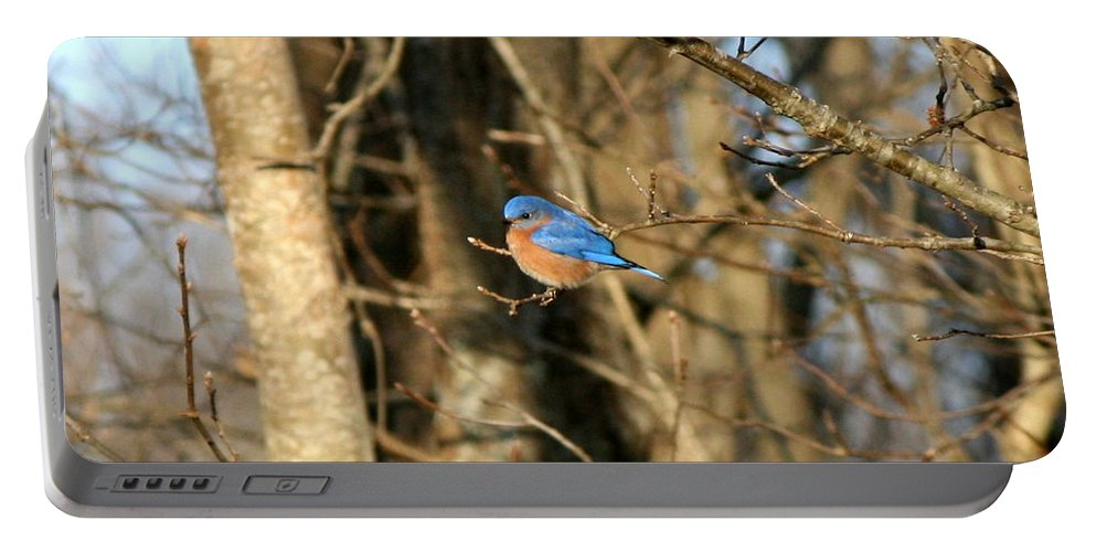 Bird Portable Battery Charger featuring the photograph March Bluebird by Neal Eslinger