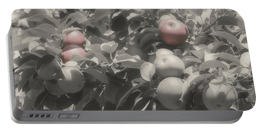 Apples Portable Battery Charger featuring the photograph Mcintosh Apples In Partial Color by Smilin Eyes Treasures