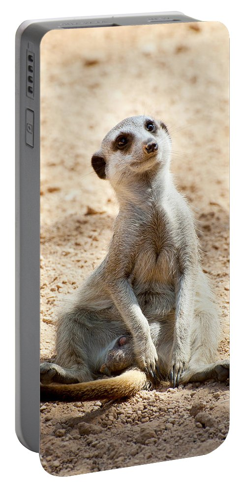 Cute Portable Battery Charger featuring the photograph Meerkat by Fabrizio Troiani