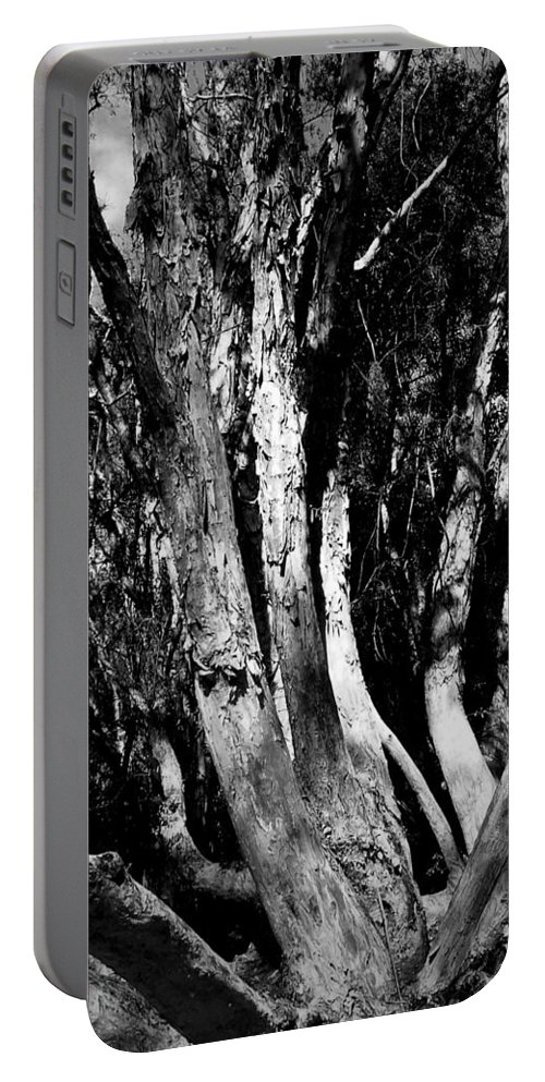 Tree Portable Battery Charger featuring the photograph Melaleuca Tree by David Weeks