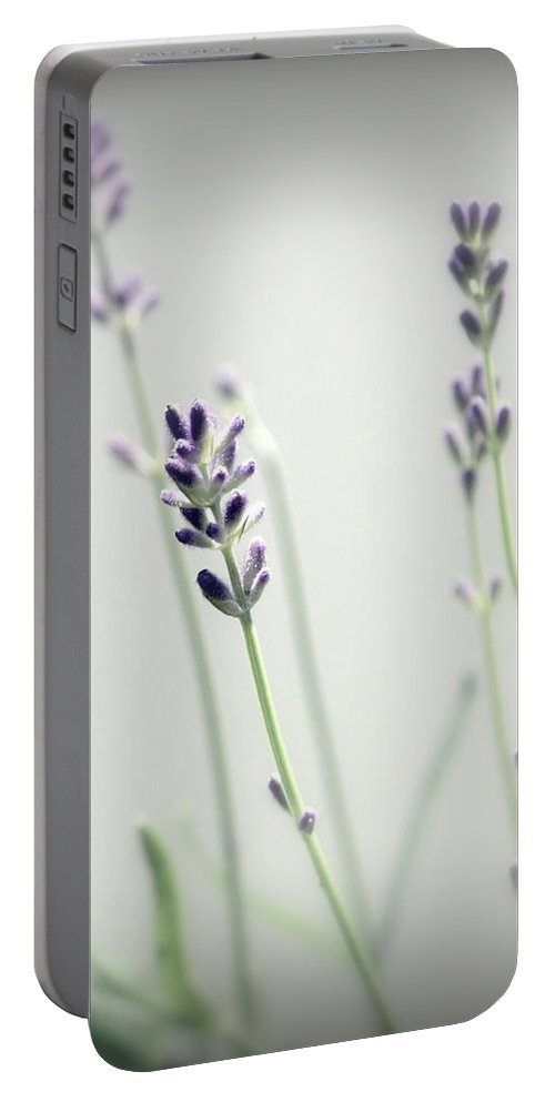 Lavender Stems Portable Battery Charger featuring the photograph Memories Of Provence by Brooke T Ryan