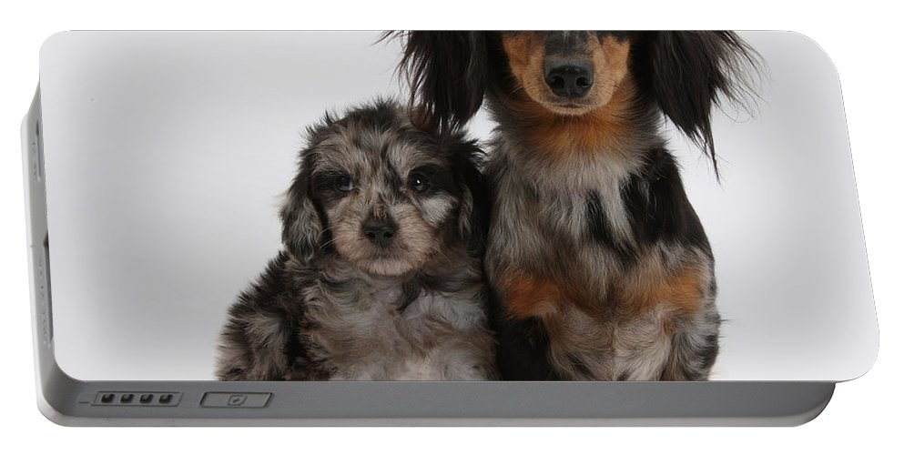 Nature Portable Battery Charger featuring the photograph Merle Dachshund And Doxie Doddle Pup by Mark Taylor