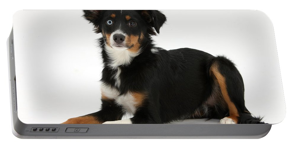 Nature Portable Battery Charger featuring the photograph Mini American Shepherd by Mark Taylor