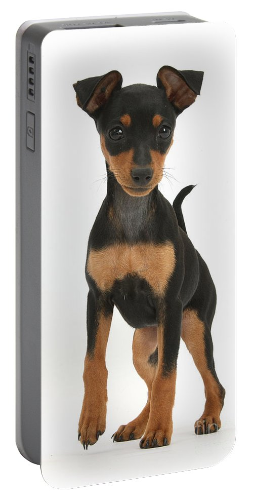 Nature Portable Battery Charger featuring the photograph Miniature Pinscher Puppy by Mark Taylor