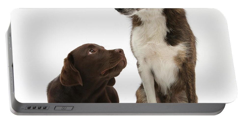 Animal Portable Battery Charger featuring the photograph Mixed Breed And Chocolate Lab by Mark Taylor
