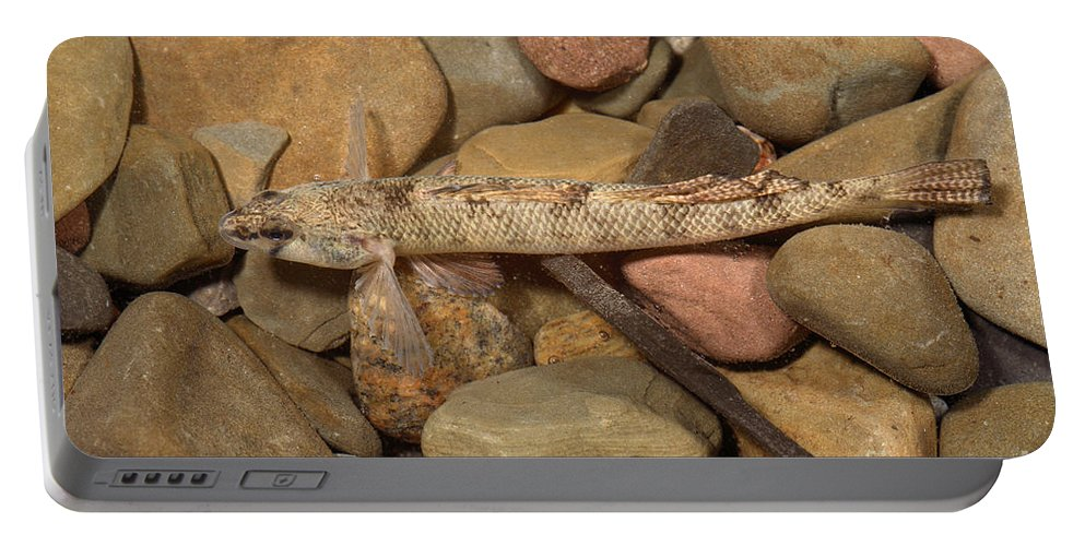 Animal Portable Battery Charger featuring the photograph Mobile Logperch Percina Kathae by Ted Kinsman