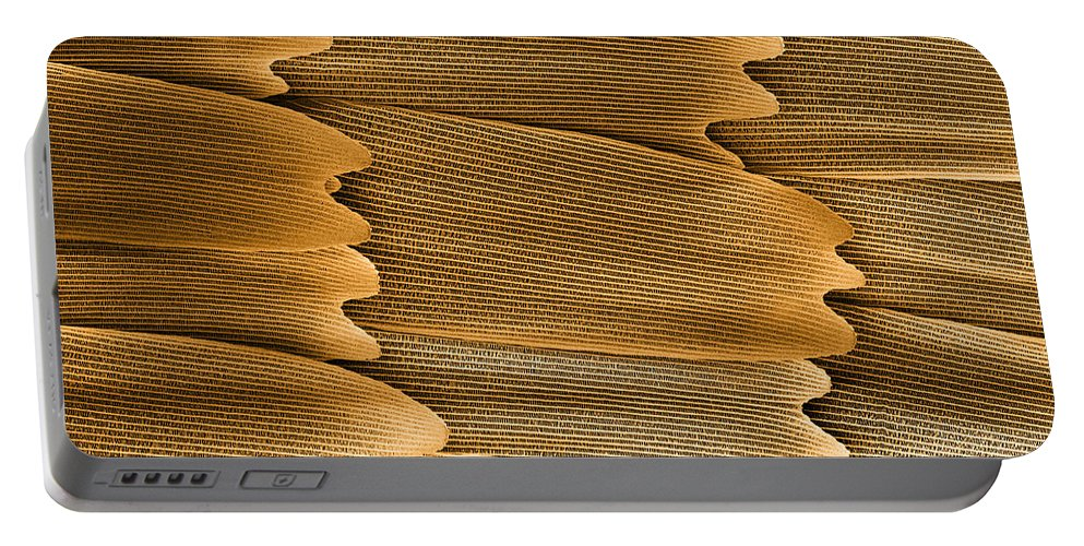 Monarch Portable Battery Charger featuring the photograph Monarch Butterfly Scales, Sem by Ted Kinsman