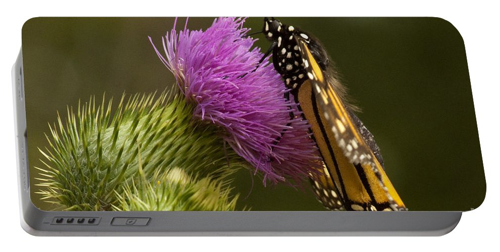 Monarch Portable Battery Charger featuring the photograph Monarch On Thistle 2 by Darleen Stry