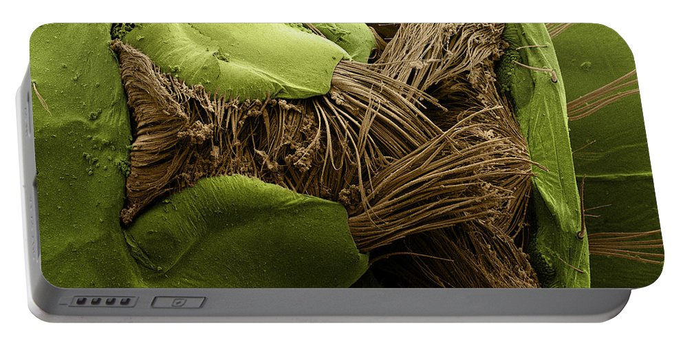 Mosquito Portable Battery Charger featuring the photograph Mosquito Larva, Sem by Ted Kinsman