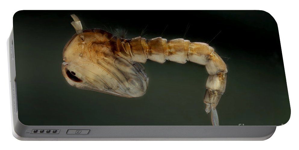 Culicine Portable Battery Charger featuring the photograph Mosquito Pupa by Ted Kinsman