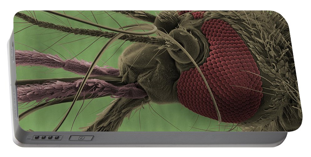 Mosquito Portable Battery Charger featuring the photograph Mosquitos Head, Sem by Ted Kinsman