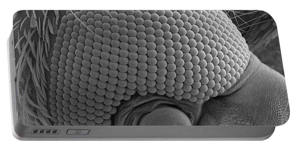 Mosquito Portable Battery Charger featuring the photograph Mosquitos Head by Ted Kinsman