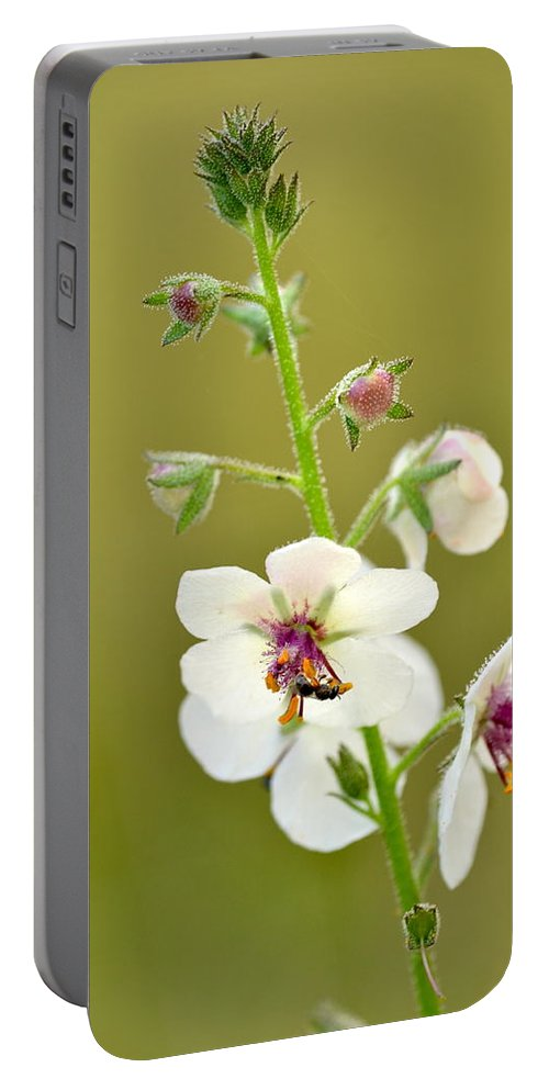 Moth Mullein Portable Battery Charger featuring the photograph Moth Mullein by JD Grimes