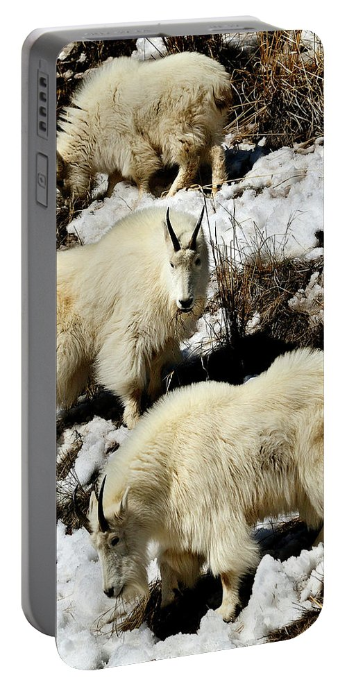 Mountain Goat Portable Battery Charger featuring the photograph Mountain Goat Trio by Greg Norrell