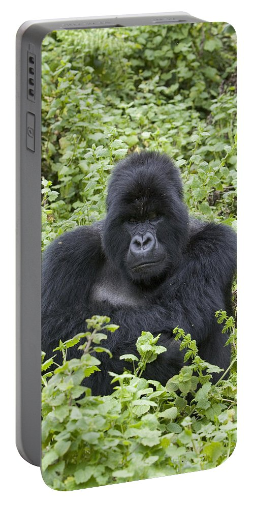 00761200 Portable Battery Charger featuring the photograph Mountain Gorilla Large Silverback Male by Suzi Eszterhas