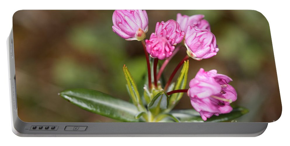 Flora Portable Battery Charger featuring the photograph Mountain Laurel by Ted Kinsman