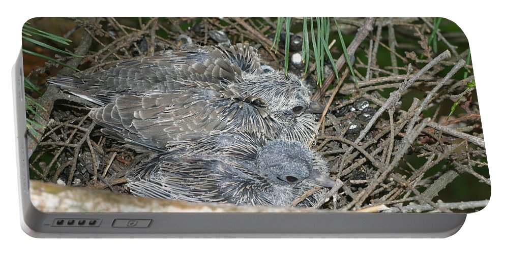 Mourning Dove Portable Battery Charger featuring the photograph Mourning Dove Chicks by Ted Kinsman