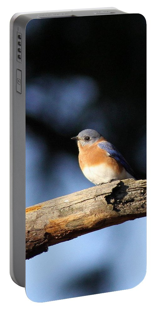 Bluebirds Portable Battery Charger featuring the photograph Mr. Bluebird by Travis Truelove