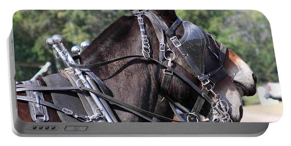 Mule Portable Battery Charger featuring the photograph Mule Days - Benson - A Pair Of Aces - Mules by Travis Truelove
