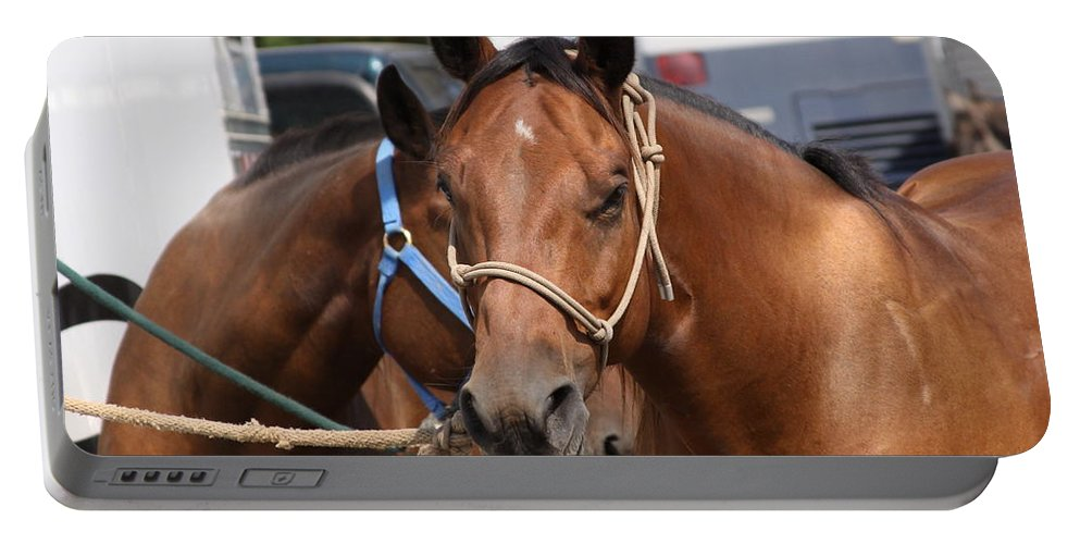 Horse Portable Battery Charger featuring the photograph Mule Days Benson by Travis Truelove