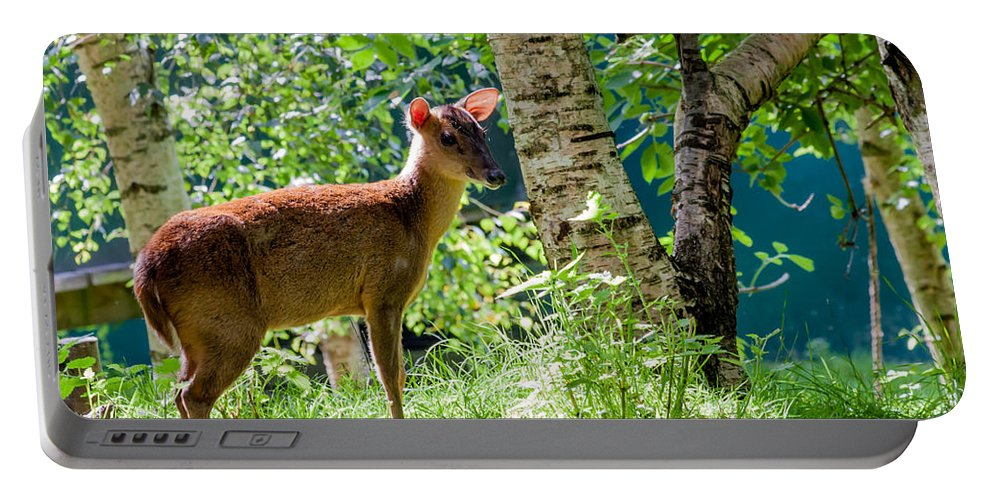 Muntjac Deer Portable Battery Charger featuring the photograph Muntjac Deer - Muntiacus Reevesi by Dawn OConnor