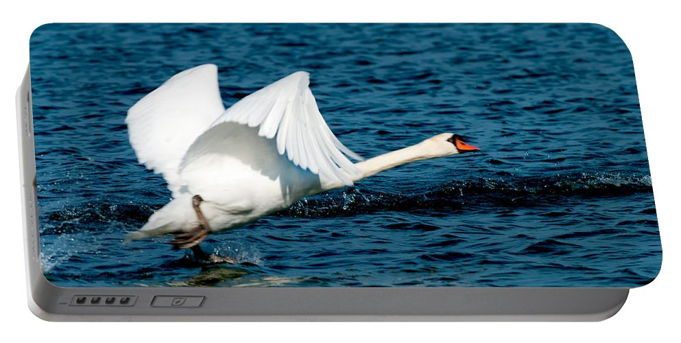 Mute Swan Take Off Portable Battery Charger featuring the photograph Mute Swan Gaining Momentum by Randall Branham