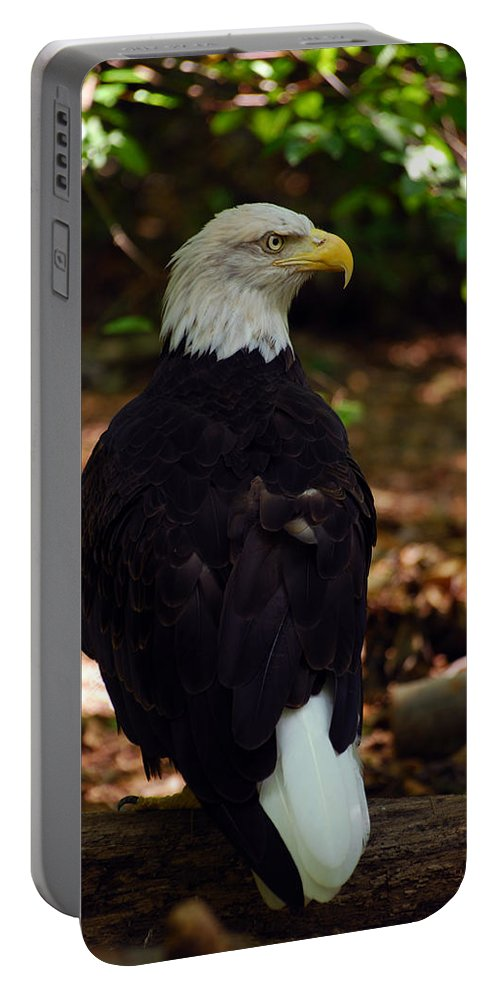 Bald Eagle Portable Battery Charger featuring the photograph My Serious Side by Lori Tambakis