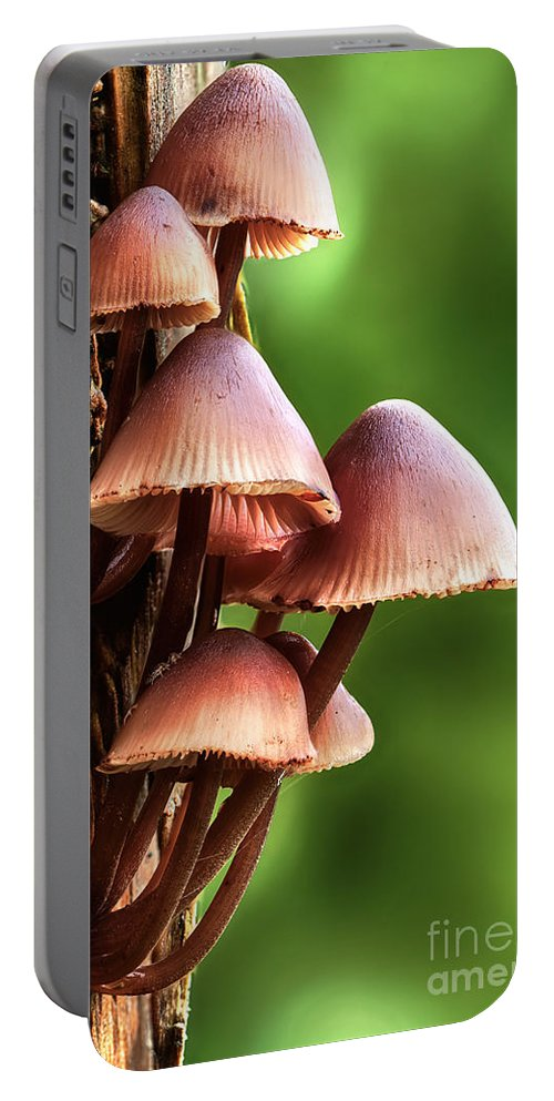 Mushroom Portable Battery Charger featuring the photograph Mycena Inclinata Mushroom On A Tree by Simon Bratt Photography LRPS