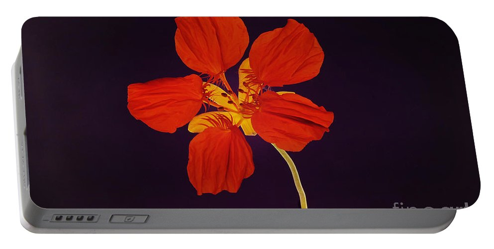 Rosids Portable Battery Charger featuring the photograph Nasturtium by Raul Gonzalez Perez