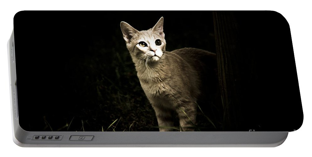 Cat Portable Battery Charger featuring the photograph Nature Visit by Kim Henderson