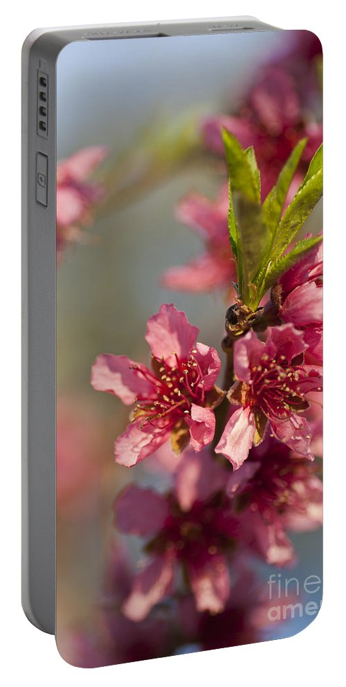 Nectarine Portable Battery Charger featuring the photograph Nectarine Blossoms by Jim And Emily Bush
