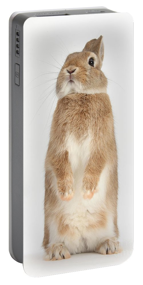 Nature Portable Battery Charger featuring the photograph Netherland Dwarf-cross Rabbit Standing by Mark Taylor