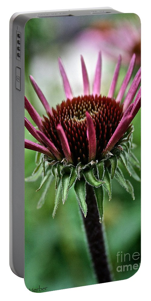 Minnesota Portable Battery Charger featuring the photograph New Beginnings by Susan Herber