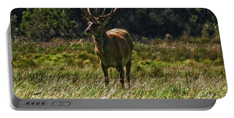 New Zealand Portable Battery Charger featuring the photograph New Zealand Elk by David Gleeson