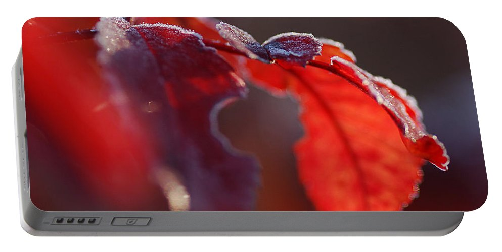 Nature Portable Battery Charger featuring the photograph Nice Frost Jack by Susan Capuano