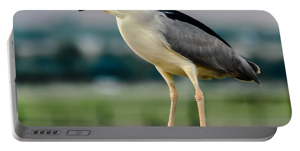 Birds Portable Battery Charger featuring the photograph Night Heron by Robert Bales